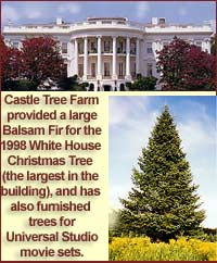Castle Tree Farm provided the 1998 White House Christmas Tree and has furnished many trees for Universal Studio movie sets.